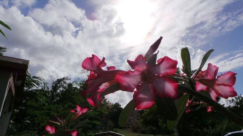 Calme et quiétude au cœur d'une végétation luxuriante